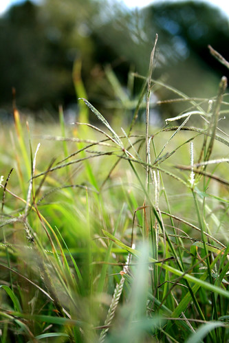 This is no ordinary grass... but the piece of land George Washington was born on lol.