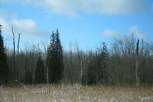 Highway-side wetland
