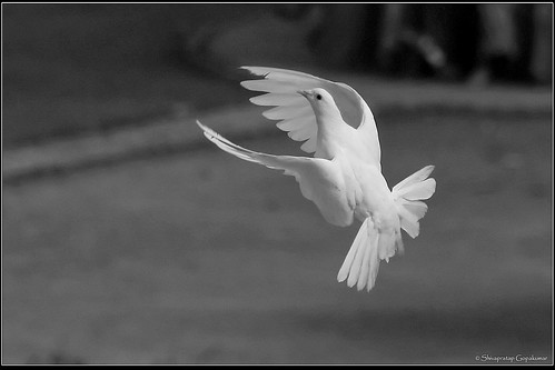 Peace, Love, Grace, Truth, Beauty....... Fly !