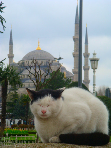 Turkish cat in front of the Blue Mosque
