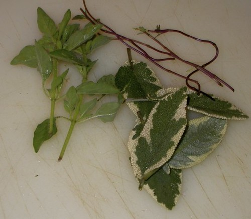Oregano,Sage, Thyme stems
