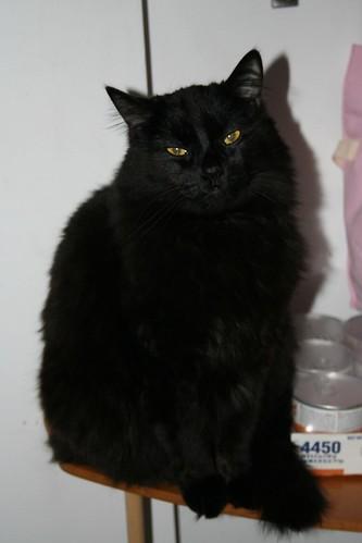 Maggie's cat