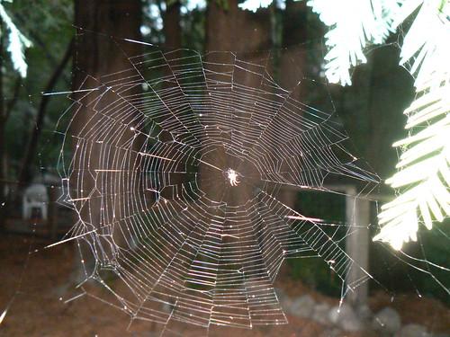 teeny tiny spider web
