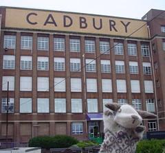 Woolly at Cadburys World
