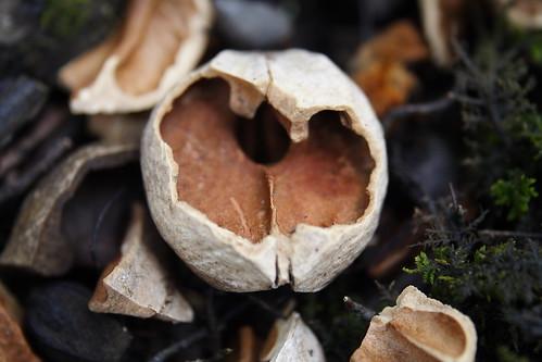 Hickory Nut Snack