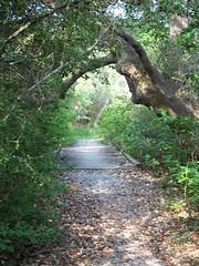 Bridge in path
