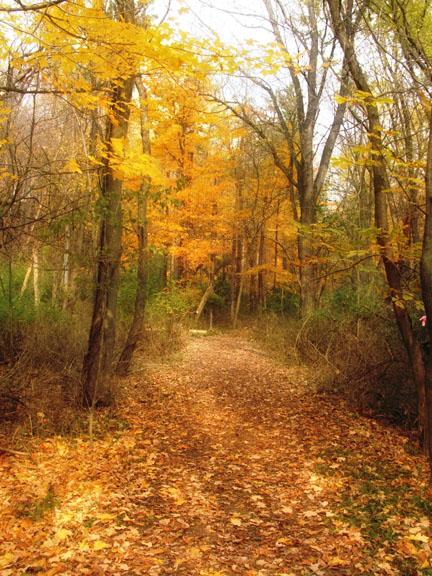 autumn fades