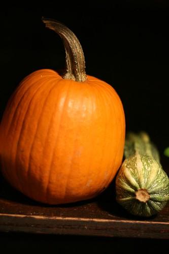 Baking Pumpkin gets cozy with an Italian Zucchini