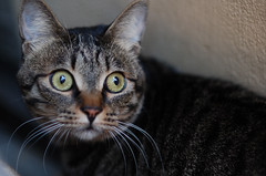 Surprised Cat?