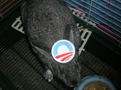 bunnies for obama