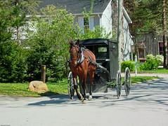 Mennonite Buggy