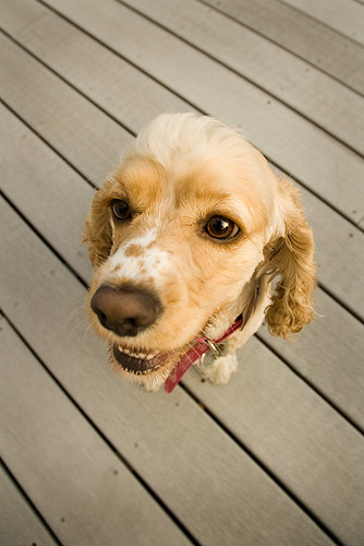 Bobbledog
