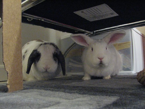 gus and betsy under my office chair