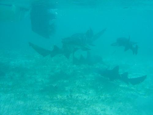 Καρχαρίες παντού