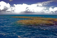 A section of the Great Barrier Reef about 40 m...