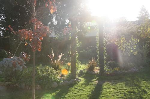 Lens Flares in my Garden