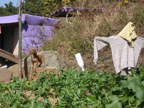 Hund und Garten