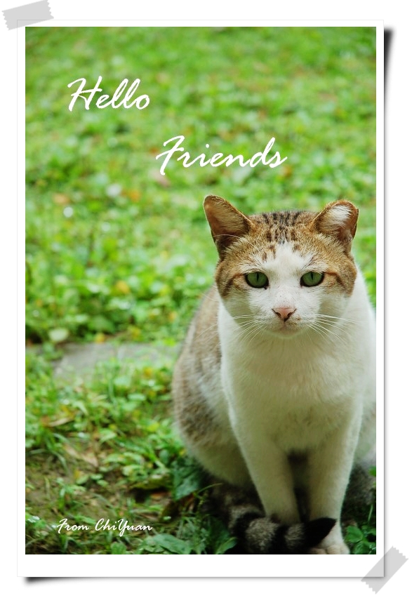 Hello卡片3