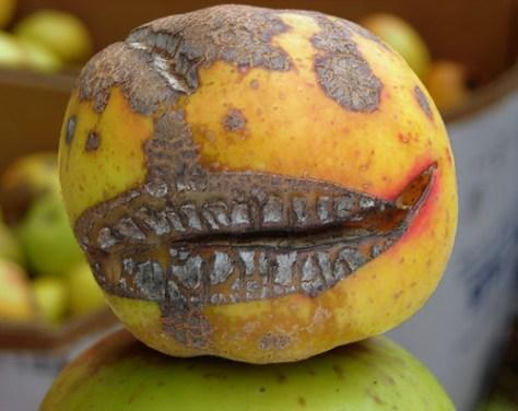 Fruit of doom