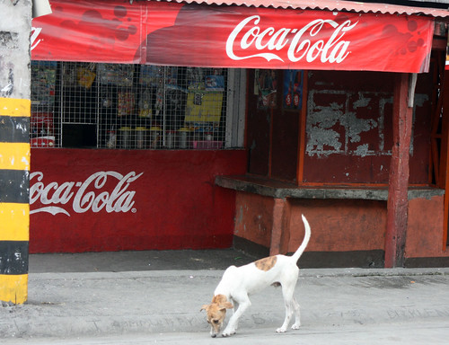 dog in front of sari sari store
