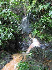 hiking in tobago, a waterfall