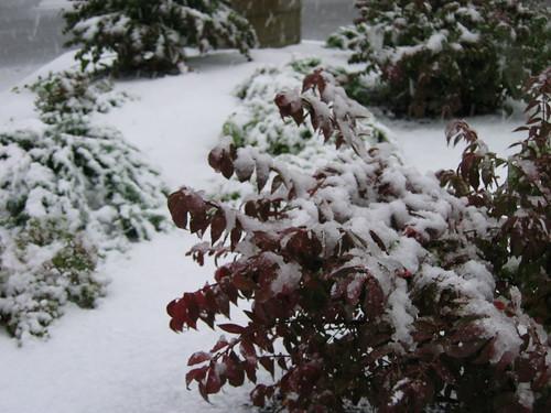 snow!  No!