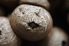 Fungus Closeup
