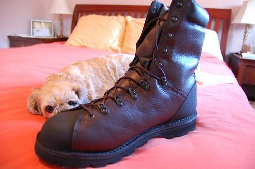 The shoe stole Bunkerella's nose.