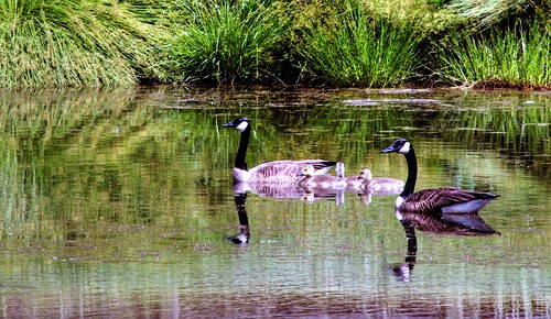 A Family Outing