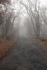 Foggy morning in Lascaux