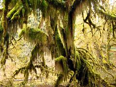 ForestDragon