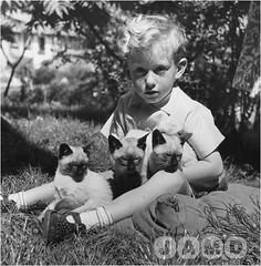 siamese-kittens-2