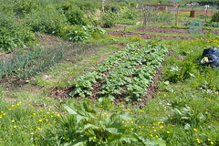 080519-allotment485