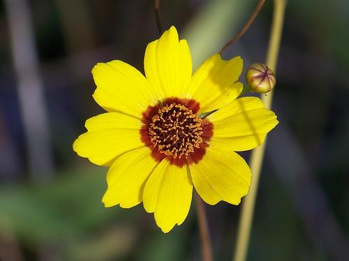 October wildflower