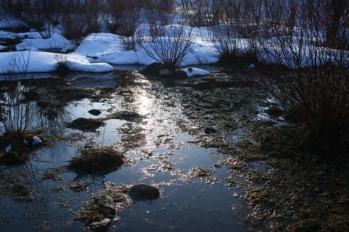 Vernal pond