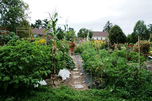 Vegetable Garden last year