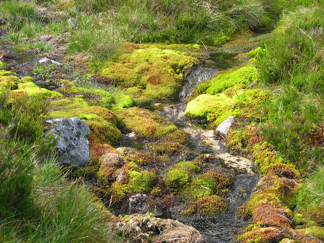 Colourful sphagnum moss