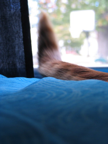 Cat Tail