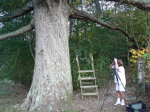 Remarkable Trees of Virginia Project: Shooting Keffer Oak From Below