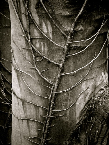 Natural Spine