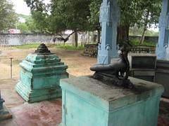 Mayil (Peacock) vahana for Muthu Kumara Swamy