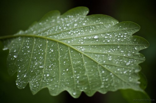Spring Rain (136 / 365)