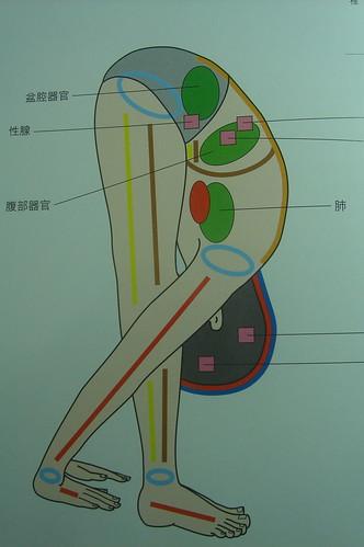 站立_脊椎伸展式