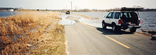 Flooded road at Blackwater NWR