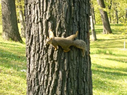 Tree Squirrel at Rum Village 02