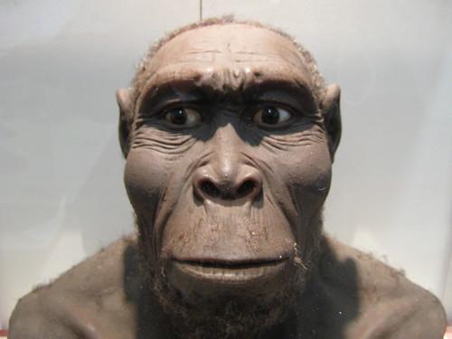 Gülecek çok az şeyi var, konuşacaklar ise bunda daha da az: Homo rudolfensis