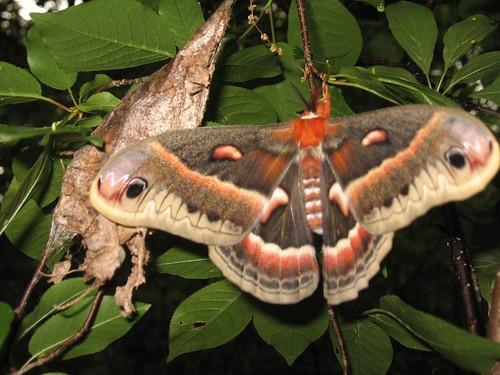 New born moth