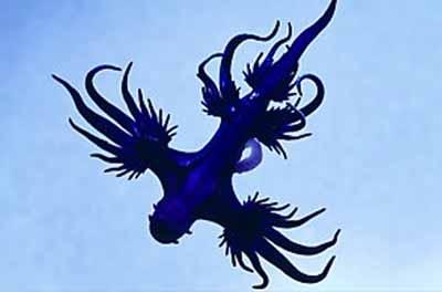 2498799257 deb1b50e2d o Criaturas inacreditáveis do fundo do mar