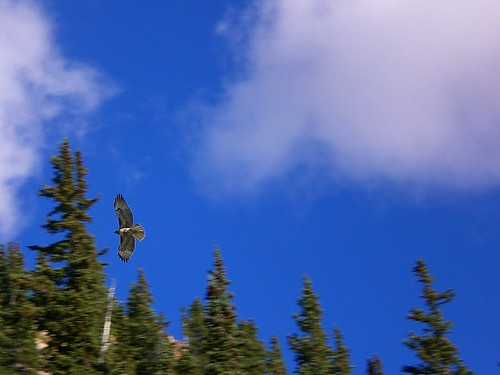 Soaring in the Mountains