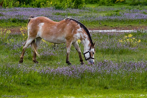 """Caballo • <a style=""""font-size:0.8em;"""" href=""""http://www.flickr.com/photos/20681585@N05/2427055846/"""" target=""""_blank"""">View on Flickr</a>"""